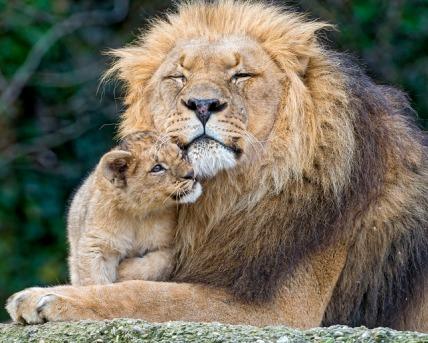 animal-love7